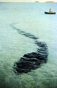 Le grand serpent de mer australien