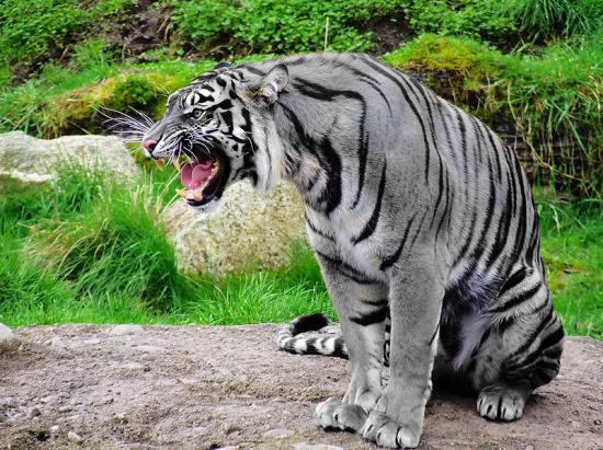 Le tigre bleu de l'euphrate acte 10 commentaire compose