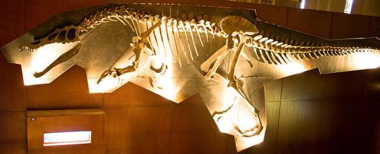 Paléontologie, spinosaurus aegypticus, François de Sarre, voile dorsale, carnivore terrestre, jurassic Park 3, Philippe Taquet , tyrannosaurus Rex, Stromer, baryonix, Eric Buffetaut, dinosaure bipède, analyse, mai 2012