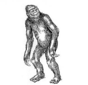 Almas, Igor Burtsev, Crypto-Investigations, Bryan Sykes, Philippe Mind, Vladimir Yamschekov, Stroganov, hominidé inconnu, cryptozoologie, russie, Solnetchnogorsk, Musée d'Etat de Darwin, Moscou,