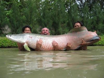 arapaima-un-poisson-qui-atteint-des-tailles-immenses.jpg