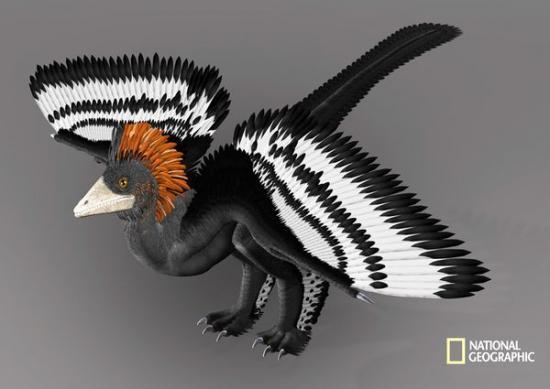 archeopteryx.jpg