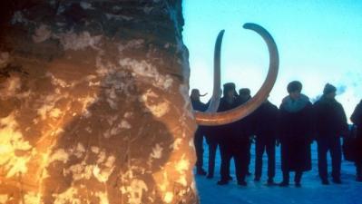 paléontologie - clonage de mammouth - septembre 2012 - proboscidien - mammouth laineux - mammuthus primigenius - wooly mammouth - Semyon Grigoryev - Yakoutie - république de Sakha - Iakoutie - Clonage - recherche de cellules - permagel - cryptozoologie - permafrost