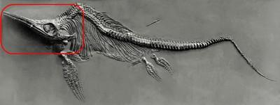 crane-d-ichtyosaure-1.jpg