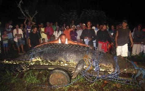 crocdile-marin-capture-a-bunawan-philippines-en-septembre-2011.jpg