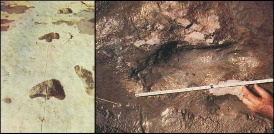 empreintes-retrouvees-en-1971-dans-la-riviere-paluxy-texas.jpg