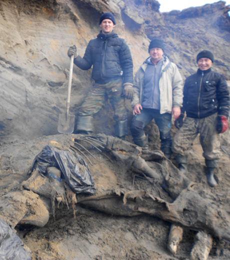 Paléontiologie - mammouth laineux - Taïmyr - Russie - Sibérie - Jénia Salinder - Pergélisol - proboscidien - aout 2012 - octobre 2012 -  Alexeï Tikhonov -  golfe du Ienisseï - océan Arctique - péninsule de Taïmyr