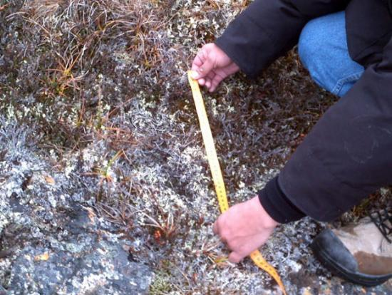 maggie cruikshank - bigfoot -Canada - Québec - Akulivik - cryptozoologie - hominidé inconnu - sasquatch - octobre 2012 - empreintes - rencontre