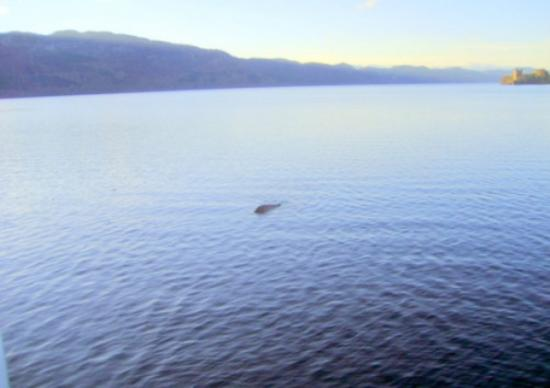 Loch Ness, crypto-investigations, Philippe Mind, cryptozoologie, George Edwards, Drumnadrochit, cryptide lacustre, Ecosse, novembre 2011, aout 2012, Steve Feltham, chateau d'urquhart, photographie, cryptozoology