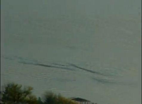 cryptozoologie cryptozoology vancouver sun créature lacustre analyse film vidéo Richard Huls ogopogo novembre 2011 lac Kelowna british colombia colombie britannique canada créature serpentiforme