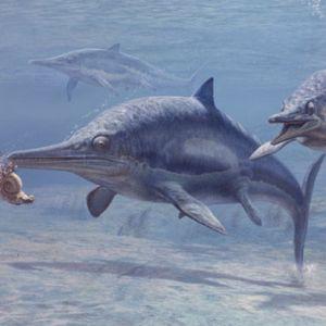 un-ichtyosaure-dans-le-lac-labynkyr-en-russie.jpg