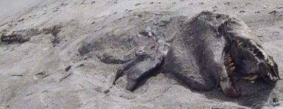 cryptozoologie-cryptozoology-tératologie-créature de Pukehina-Nouvelle Zélande-orque-épaulard-Elizabeth Ann-mai 2013-putréfaction-Philippe Mind-animal marin-canular